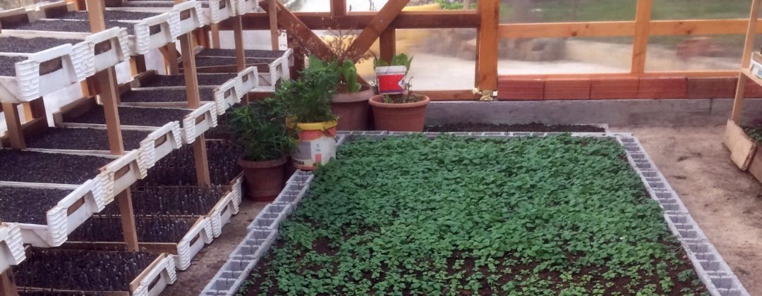 Agro-MAP plant production for experimental cultivation, Testanbau für Arznei- und Aromapflanzen