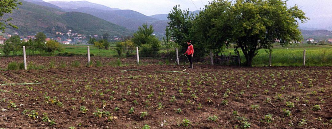 Agro-MAP contract cultivation medicinal aromatic plants, Vertragsanbau für Arznei- und Aromapflanzen