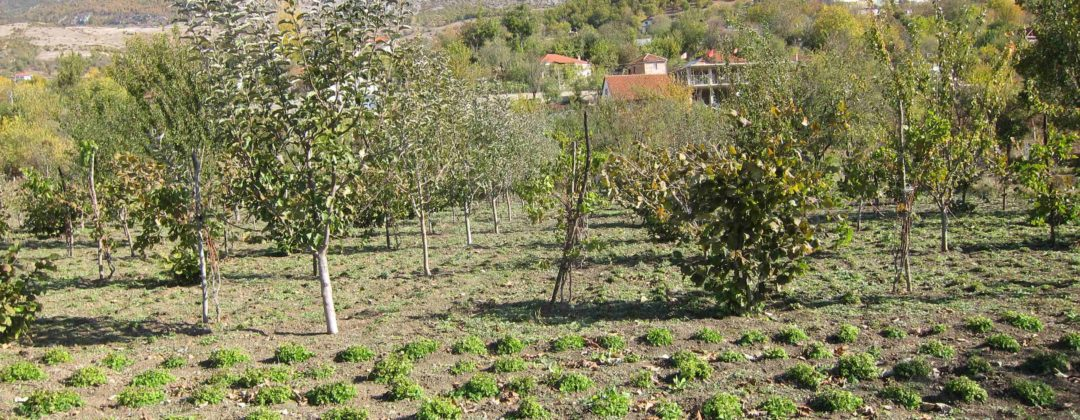Agro-MAP permaculture Albania